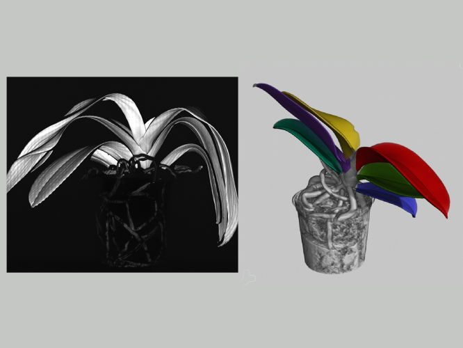 Laser scanning vs X-Ray