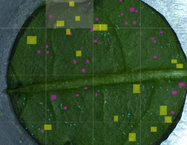 Aris vision System - Counting pest insects